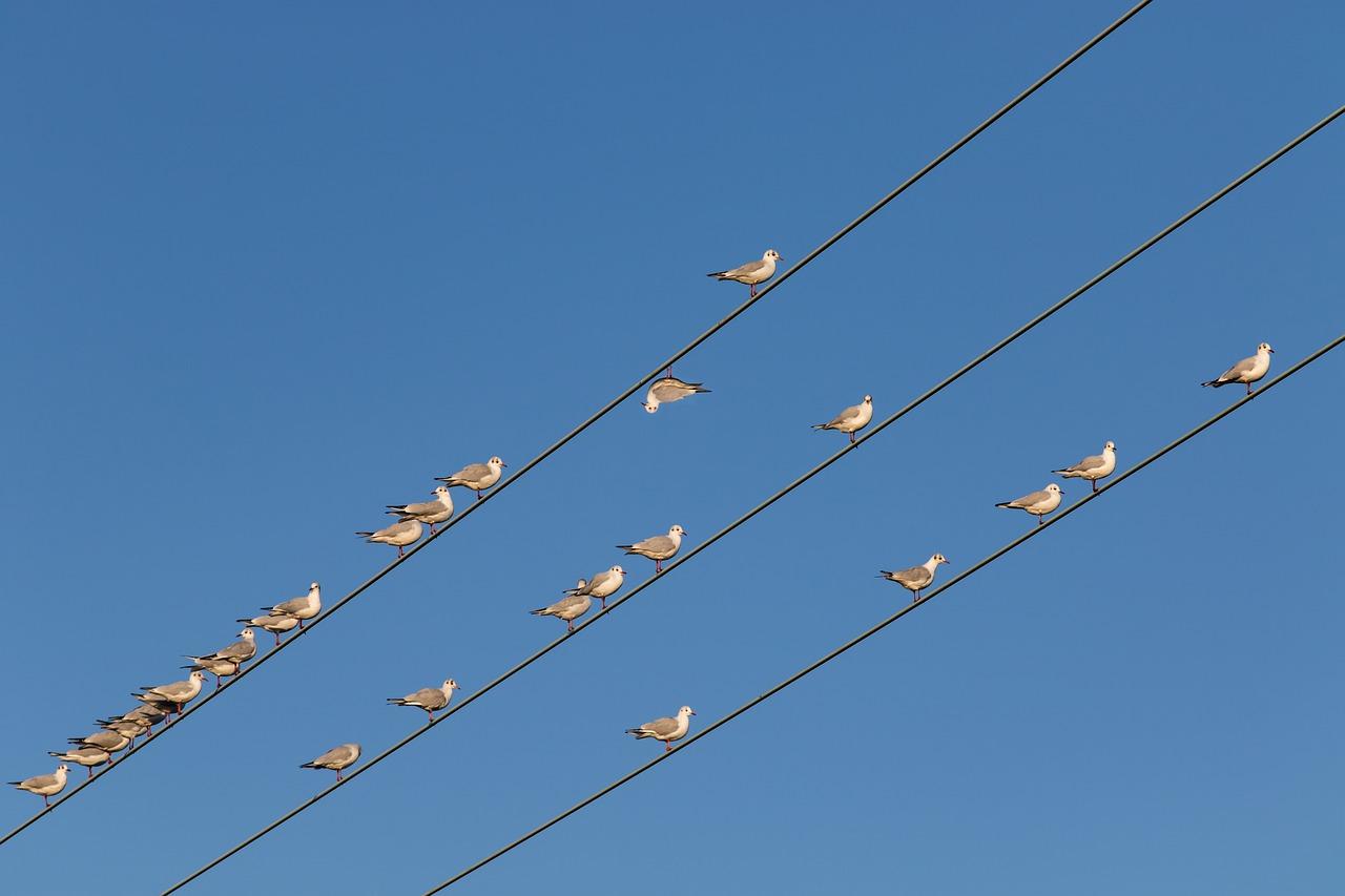 【なぜ】電線にいる鳥が一様に同じ方向を向いている理由