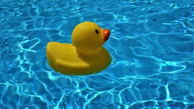 あひるがプールに浮いている画像