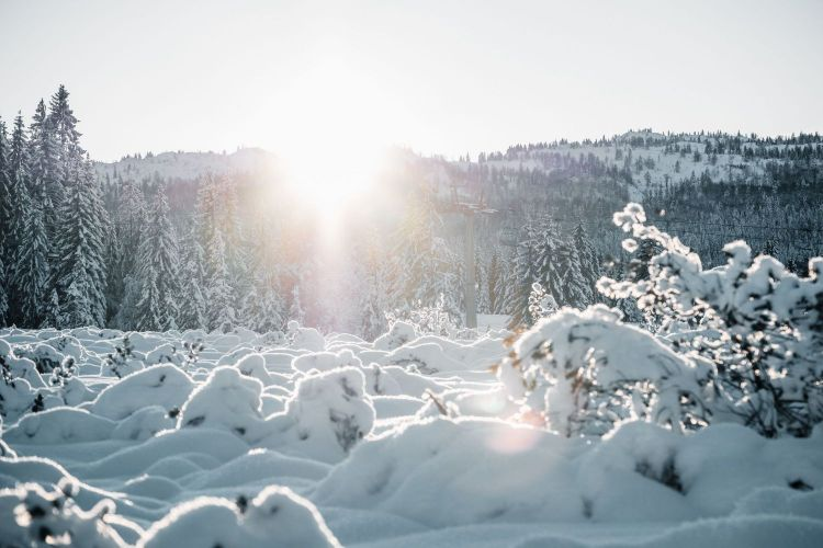 晴れた光が差しこむ雪山の図