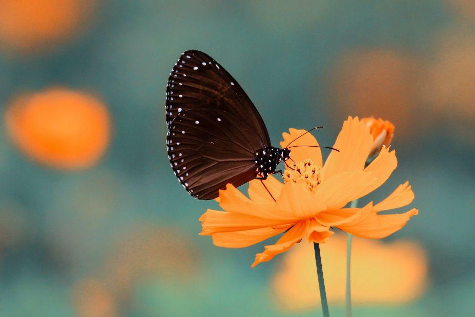 小ささを表す花と蝶の写真画像