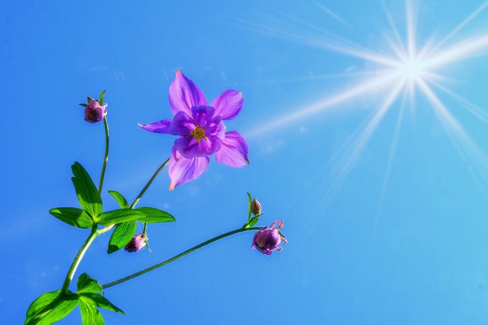 青空に紫色の一輪の花が咲くイメージ画像